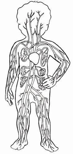 Resultado de imagen de sistema circulatorio para colorear ...