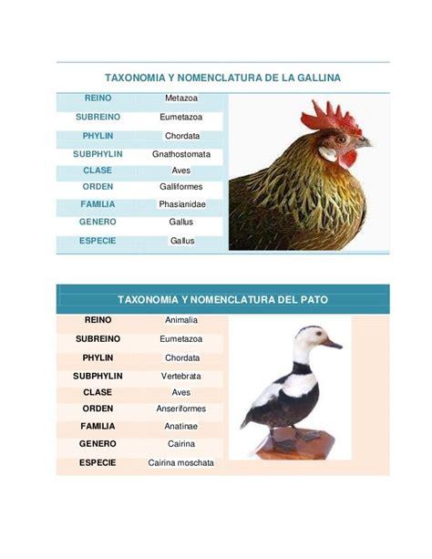 Resultado de imagen de taxonomia de especies animales que ...