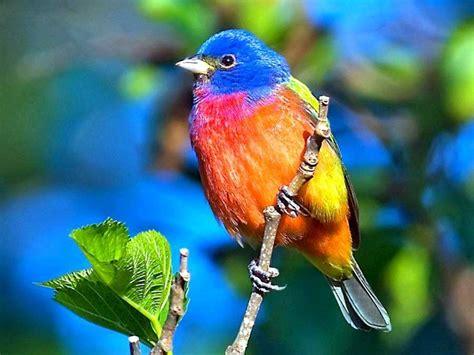 Resultado de imagen para aves exoticas | Aves exóticas ...
