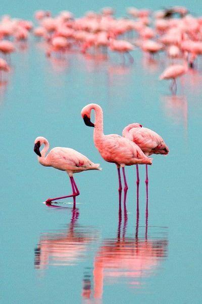 Resultado de imagen para flamencos rosados | Pájaros ...