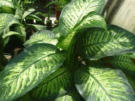 Resultado de imagen para plantas venenosas para humanos ...