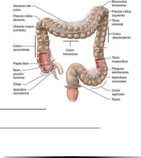 Resumen: Tercer Parcial   Resúmenes | Anatomía e Imágenes ...