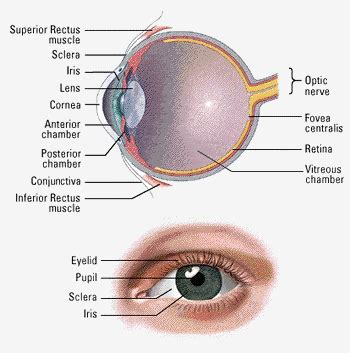 Retina Consultants of Western New York