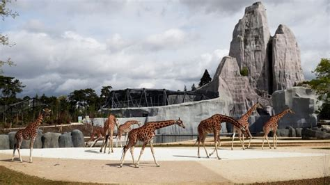 Revamped Paris Zoo shows animals together in natural ...