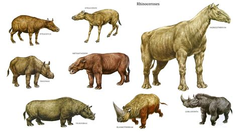 Rhinoceri. | Prehistoric animals, Mammals, Prehistoric world