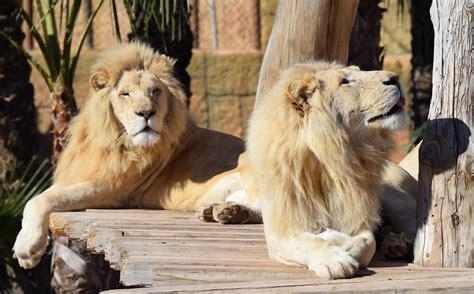 Río Safari Elche cumple 36 años   Rio Safari Elche
