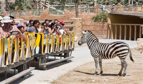 Río Safari Elche: Opiniones, Info, Precios, Ofertas ...
