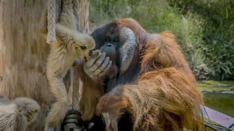 Río Safari Elche supera los 146.000 visitantes anuales ...