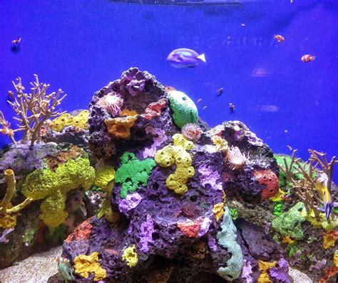 Rockhounding Around: New Orleans  Audubon Aquarium of the ...