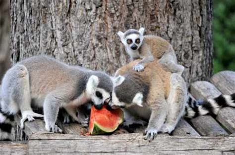 Rome zoo animals get fruity holiday treat The Local