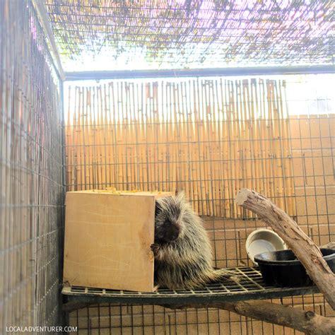 Roos n More Zoo in Las Vegas >> An Exotic Petting Zoo