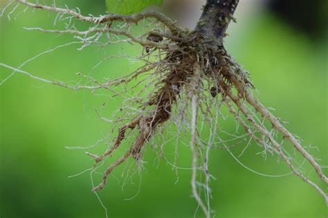 Roots of a plant with green background Photo | Free Download