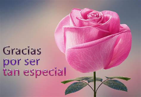 rosa rosa mensaje gracias por ser tan especial para ...