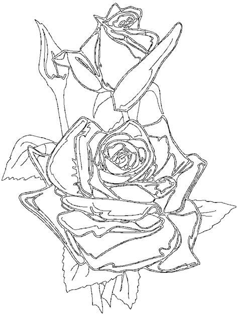 rosa sant jordi dibujo para pintar