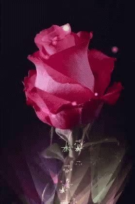 Rosas Flower GIF   Rosas Flower   Discover & Share GIFs