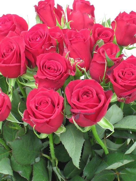 Roses Wholesale   Buy Online   Tesselaar Flowers