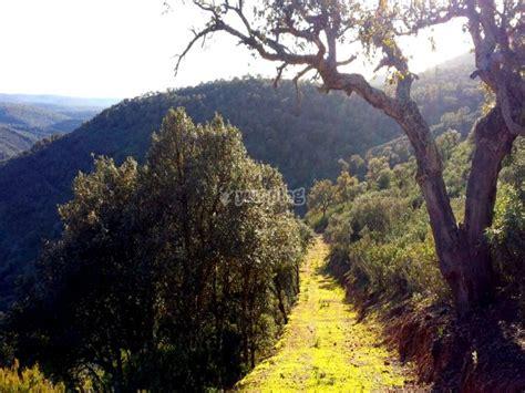 Ruta en 4x4 en Parque Natural Cabañeros para niños ...