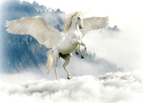 ᐈ Avistamientos de Unicornios Reales【MundoUnicornios】