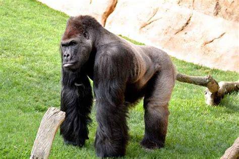 ⊛ Bioparc Animal Park Fuengirola   Vacation Marbella