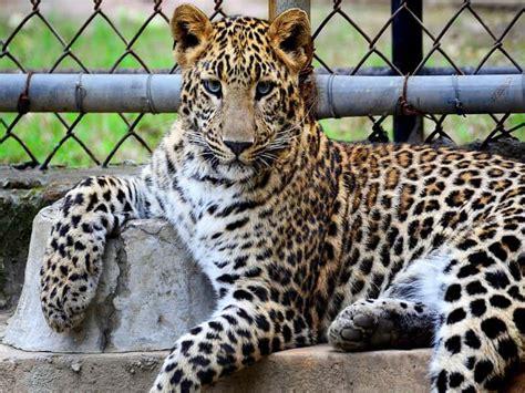 ≫ ¿Dónde comprar entradas 2x1 para el zoo de Madrid? ⊛ ...