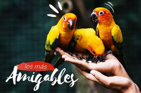 ︎ Las 5 Especies de Aves más Cariñosas | Casa De Mascotas