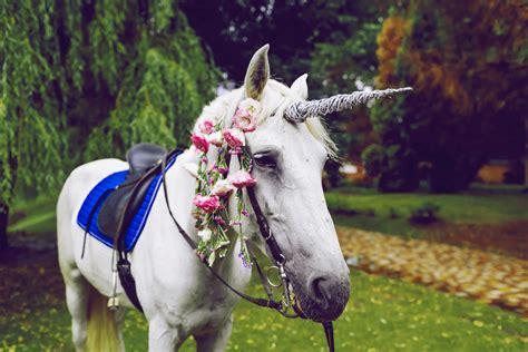 ᐈ ¿Los unicornios son reales?    UNICORNIOS.website