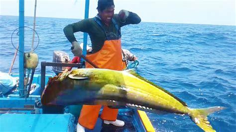 ️ Pescando PERICOS 【NIVEL EXPERTO】   YouTube