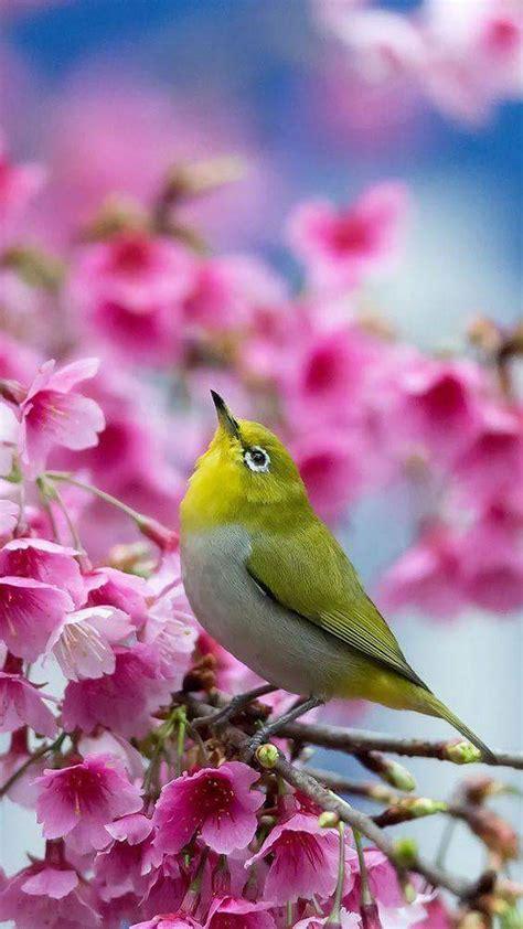 ג קלין ולינוב | Aves exoticas del mundo, Pájaros de colores