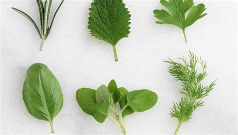 ⃟ Tipos de plantas con semillas   Geniolandia