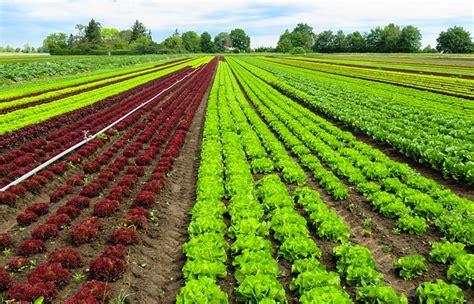 ¿Sabe cuál es la Importancia de la Agricultura? Descúbralo ...