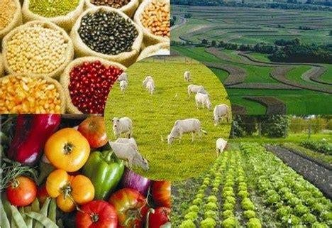 ¿Sabe qué son los Productos Agropecuarios? Descúbralo aquí