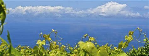 ¿Sabes cuantas denominaciones de origen de vinos hay en ...