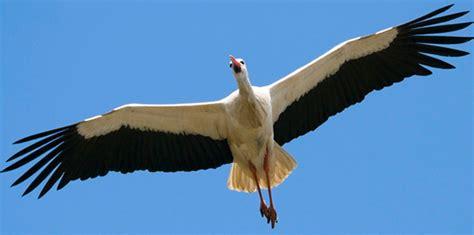 ¿Sabías por qué?...las aves migran de un sitio a otro que ...