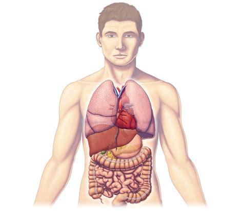 ¿Sabías que hay órganos prescindibles? Son 16, sin ellos ...