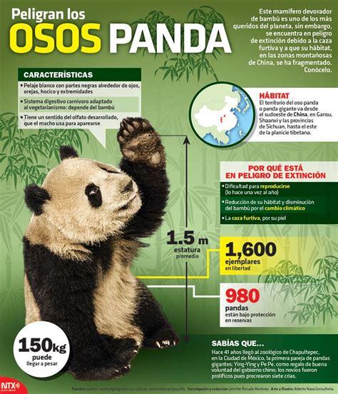 ¿#SabíasQué un Oso Panda llega a pesar 150Kg.? Conoce más ...