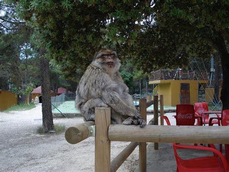 Safari Aitana en Alcoi   Parque natural en España