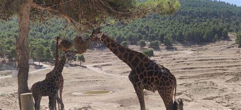 Safari Aitana  Penaguila : AGGIORNATO 2020   tutto quello ...