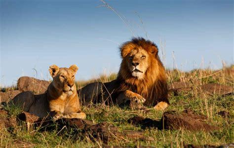 Safari Horizon Kenya dès 2346 €, Safari Kenya | Kuoni