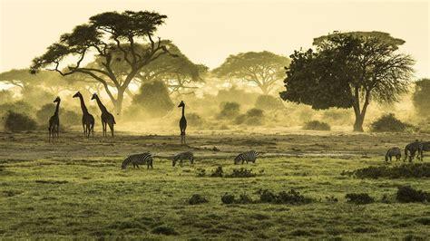Safari in East Africa   Kenya and Tanzania   YouTube