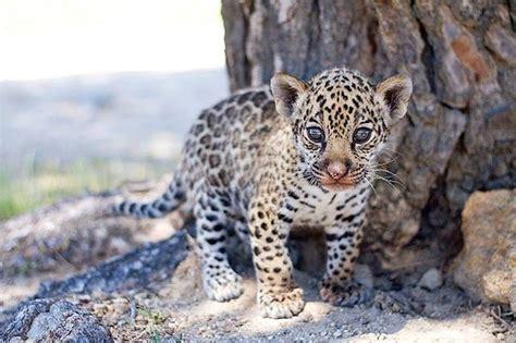 Safari Madrid. Parque temático de animales para niños