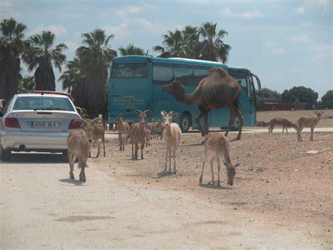 Safari Madrid, un trocito de África en Aldea del Fresno ...