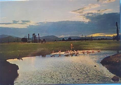 Safari Park, El niño y los patos, EL VERGEL  Alicante