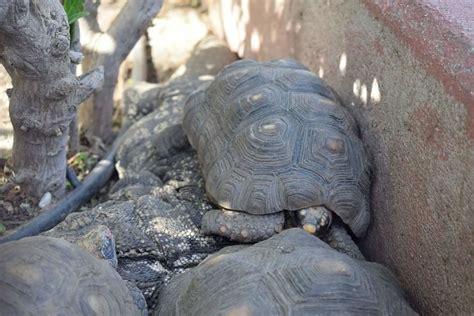 Safari Park: Opiniones, Info, Precios, Ofertas | PACommunity