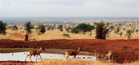 Safari por Kenia   Entre Montañas