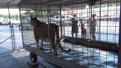 Safari Traveling Petting Zoo   YouTube