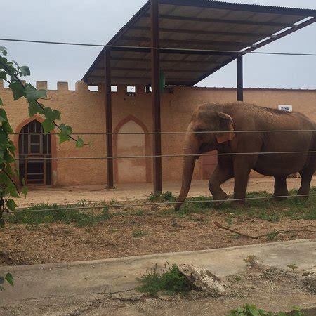 Safari Zoo  Porto Cristo    2018 All You Need to Know ...