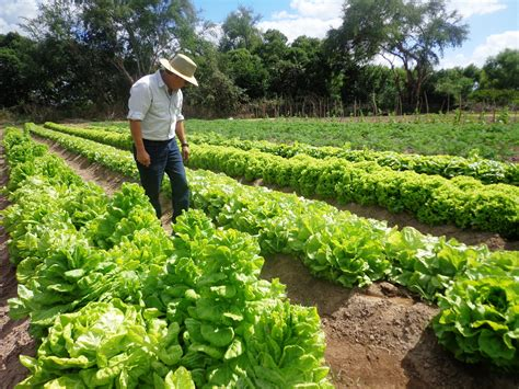 SAG   Secretaría de Agricultura y Ganadería   Gobierno de ...