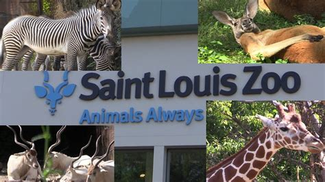 Saint Louis Zoo Missouri   YouTube