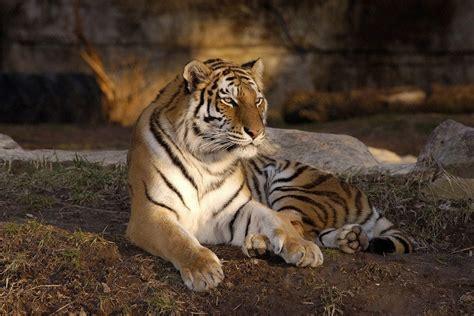 Saint Louis Zoo: St. Louis Attractions Review   10Best ...