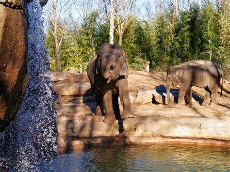 Saint Louis Zoo To Buy 425 Acres In The North County | St ...